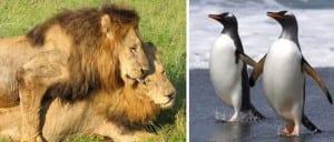 Homosexualidad animales zoo